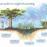 Rain Garden Sketch