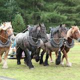 Paard en erfgoed 2009