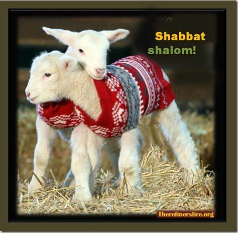 Poster_lambs