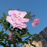 Gardening 2013 - 115_5410.JPG