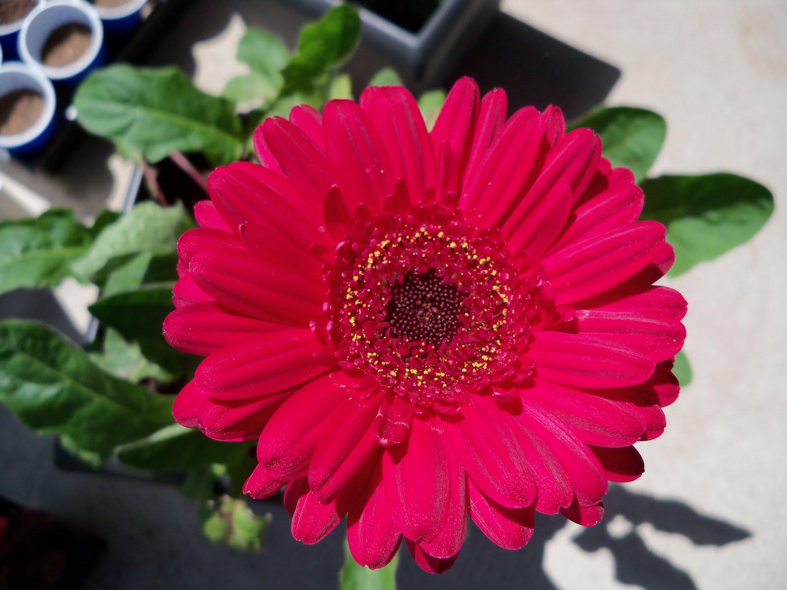 Gardening 2010 - 101_0582.JPG