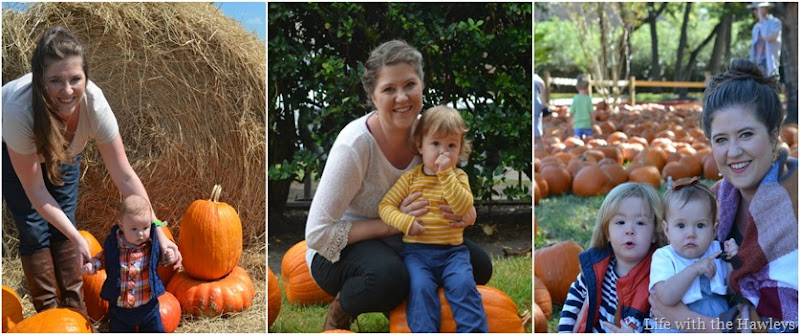 Pumpkin Patch through the years