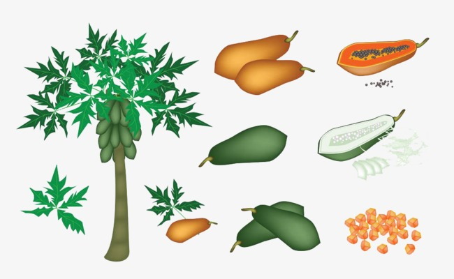 [papaya+d%5B3%5D]