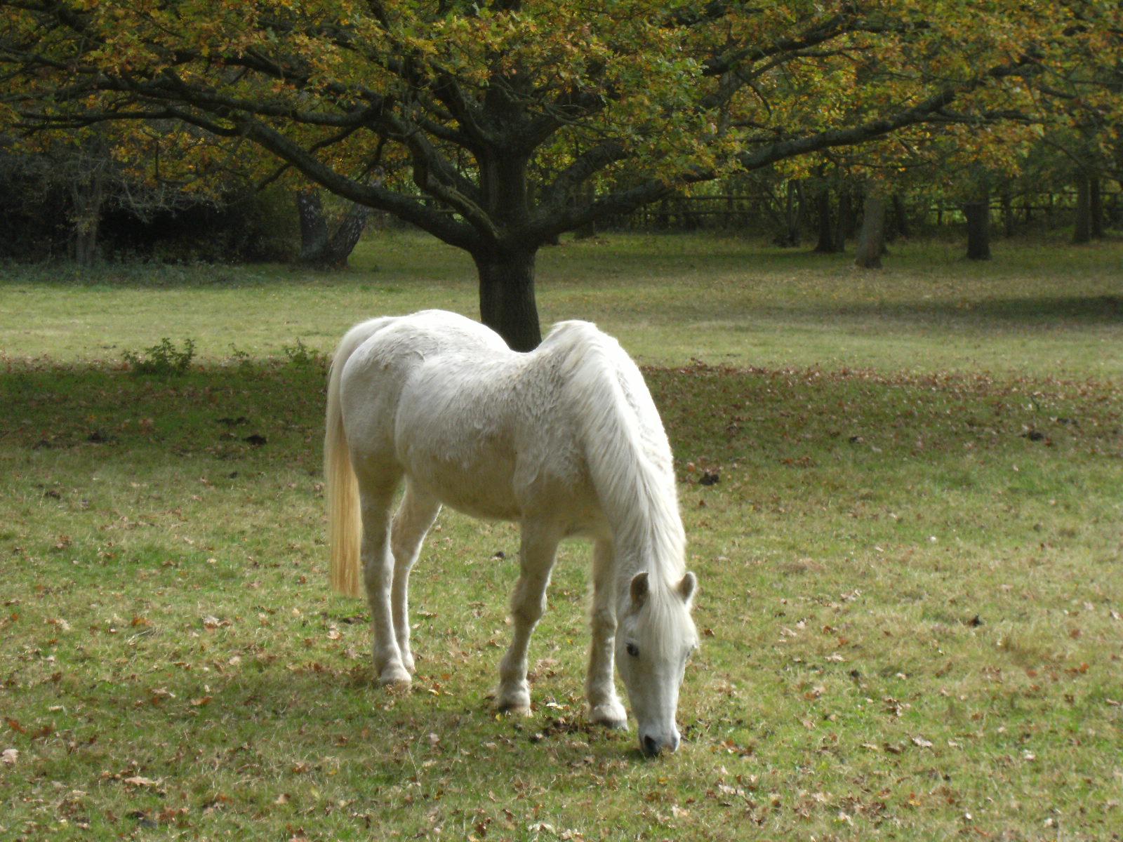 DSCF2290 White horse at Fleethill Farm