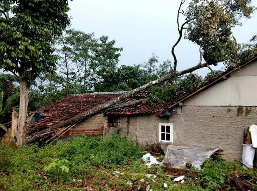 3 Rumah di Bojonggenteng Tertimpa Pohon Tumbang