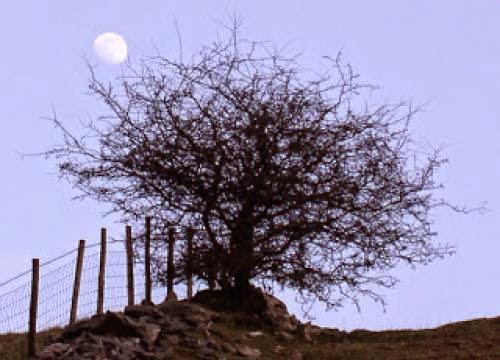Gibbous Moon Enters Gemini