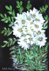 452 White Flowers