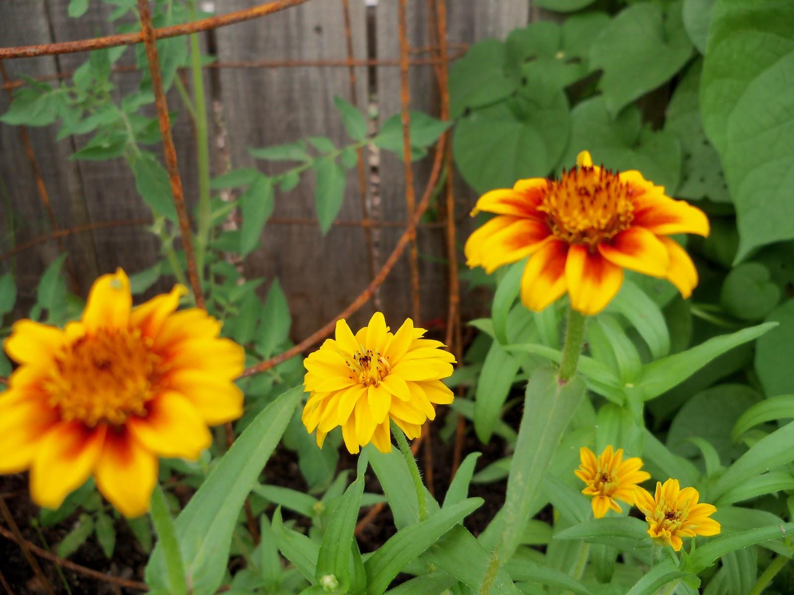 Gardening 2010, Part Three - 101_3574.JPG