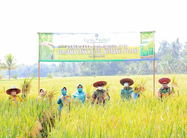 Dukung Program Food Estate, Bank Kalsel Panen Raya Padi di Tabalong