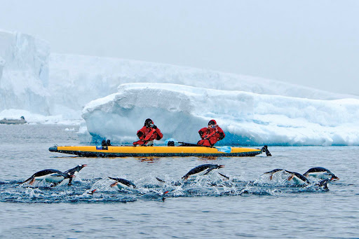 Kayakers in Antarctica take photos of gentoo penguins during a Lindblad Expeditions trip.