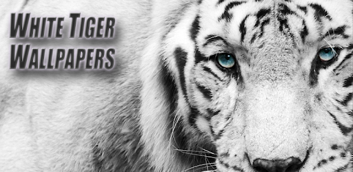 White Tiger Wallpapers Applications Sur Google Play