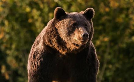 """Πρίγκιπας του Λίχτενσταϊν σκότωσε τον """"βασιλιά"""" των αρκούδων στην Ευρωπαϊκή Ένωση"""