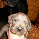 Star & True Blues February 21, 2008 Litter - HPIM0951.JPG