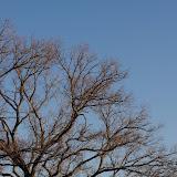 01-05-13 Arbor Hills Nature Preserve - IMGP3974.JPG