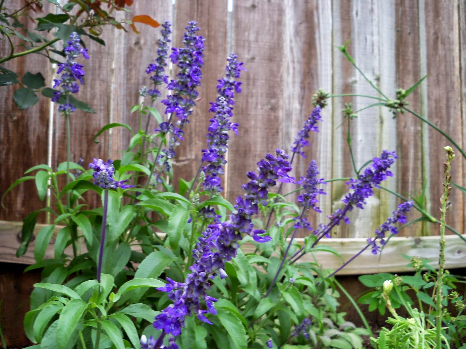 Gardening 2014 - 116_2589.JPG
