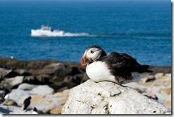 bayoffundy.ca-SEABIRDS 40 Good reasons to protect the Bay of Fundy.pdf - Adobe Acrobat Professio