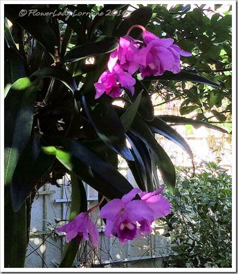 10-22-orchids2