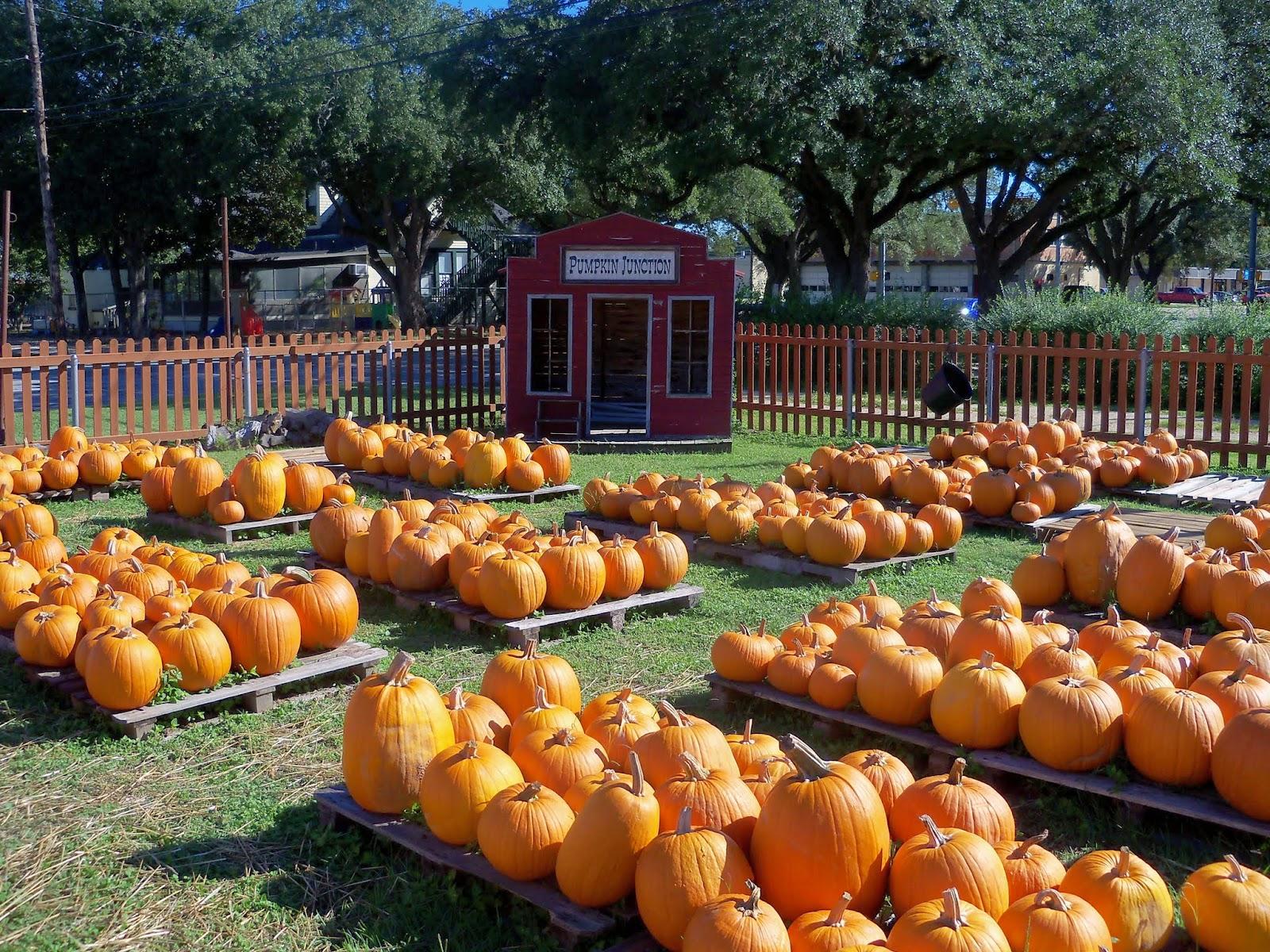 Pumpkin Patch 2014 - 116_4423.JPG