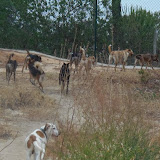 Quinta Life - 2,5 hectares of fun......