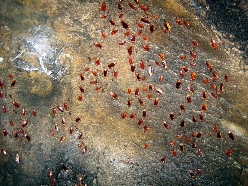 gomantong-caves-1