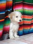 Puppy in the Hostel (Oaxaca)
