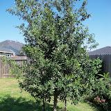Gardening 2011 - 100_9024.JPG
