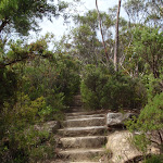 bottom of Lady Darley Lookout track (93700)