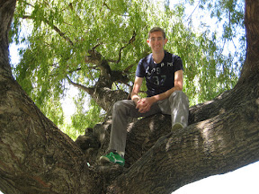 In a tree, Queenstown