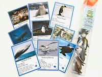 Animals of Antarctica Printable with Safari Toob Antarctica Set