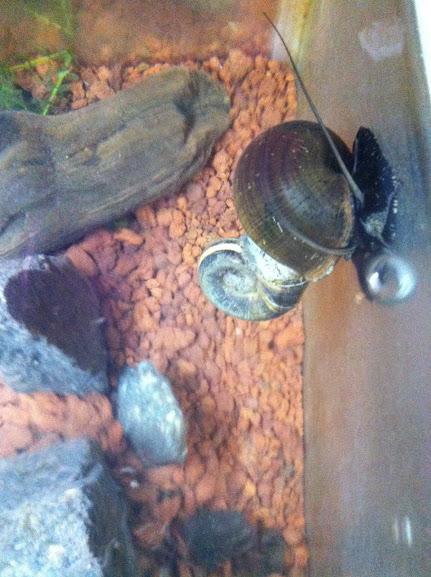 Mis caracoles esperando su nueva casa, Vídeos y Fotos. IMG_2680