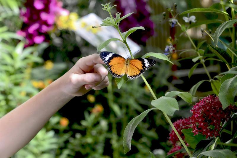 Papiliofobia di GVatterioni