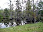 sam-houston-jones-state-park-lake-charles-la-2009 6-23-2009 2-52-22 PM 7-3-2009 10-55-39 AM.JPG