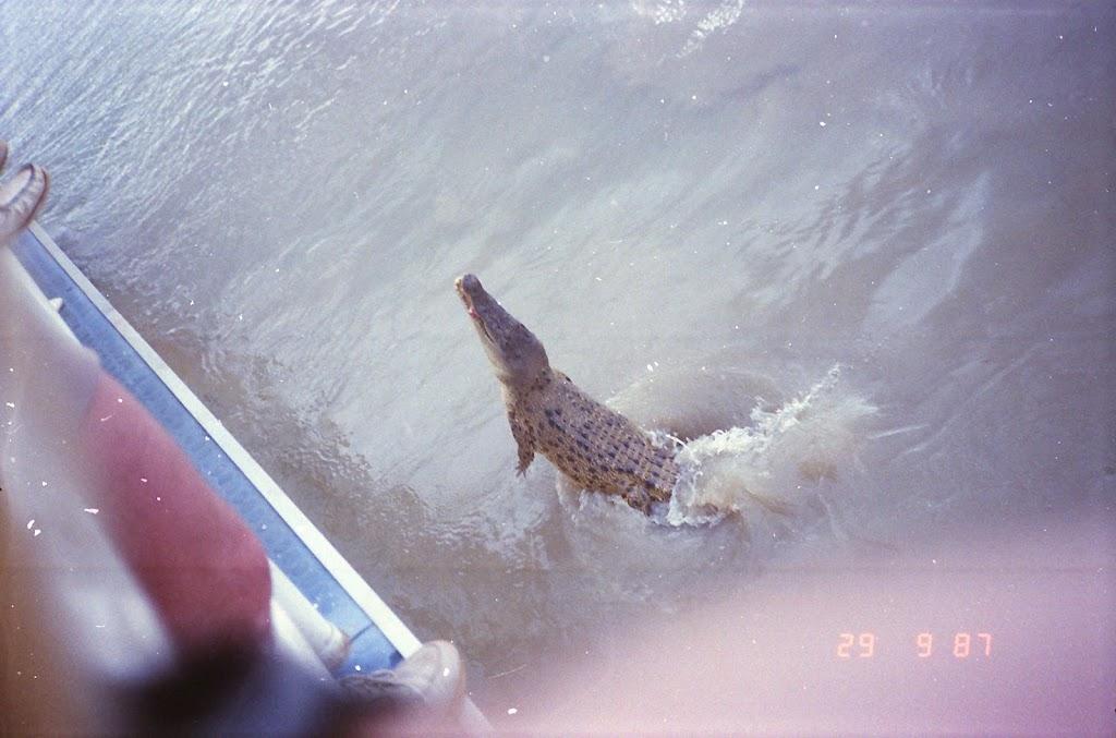 6170Adelaide River Croc Tour