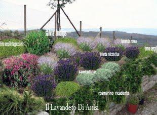 Progetti giardini online gratis progetti giardini privati - Santolina in cucina ...
