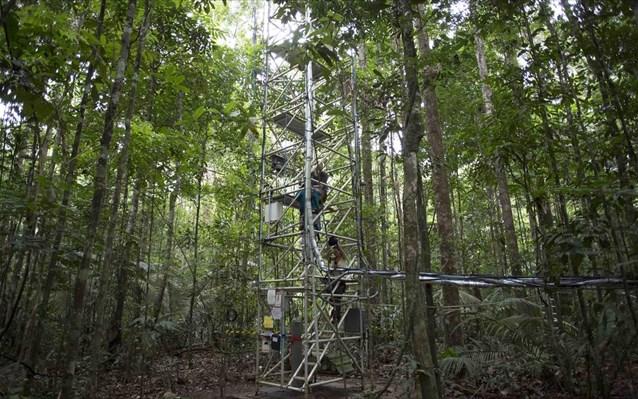 Τροπικά δάση: Αυξημένη 12% η καταστροφή τους το 2020