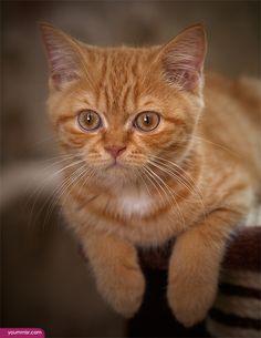 ماهي اسباب العطس المتكرر عند القطط