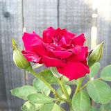 Gardening 2009 - 101_4559.JPG