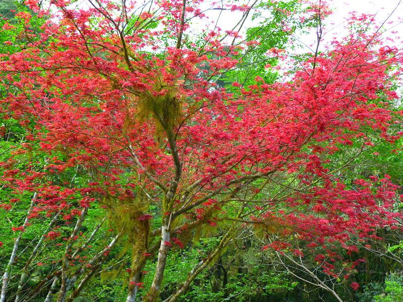 TAIWAN Taoyan county, Jiashi, Daxi, puis retour Taipei - P1260496.JPG