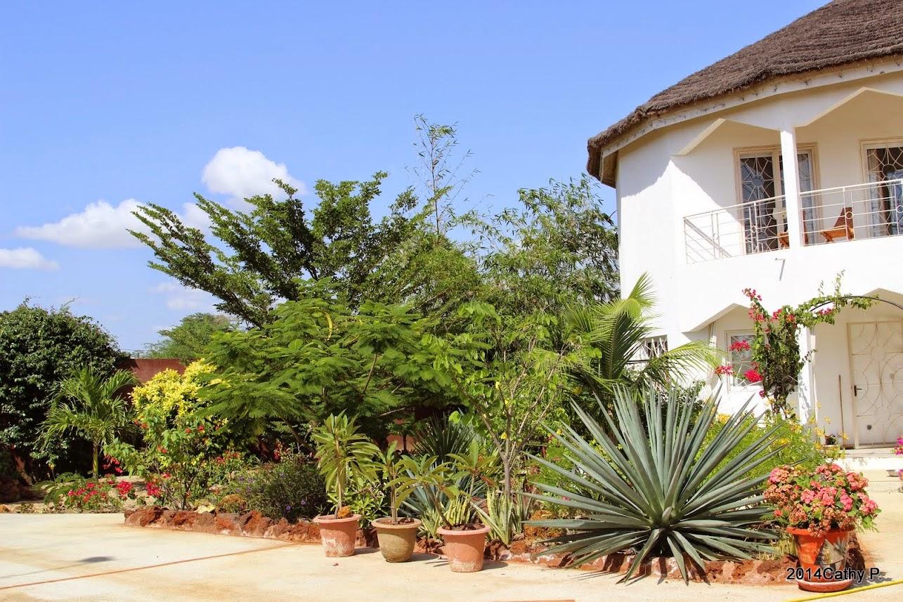 Mon jardin senegalais IMG_1666