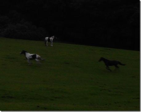 20 galloping