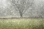 POINTILLISME   Grue cendrée en halte migratoire. La pluie s'est transformée en neige, le tableau a pris forme