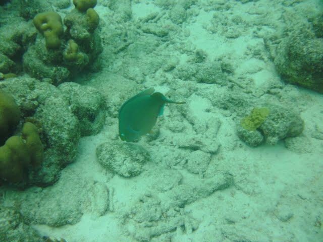 Bonaire 2011 - PICT0068.JPG