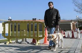 Los perros guía facilitan la autonomía de 221 madrileños con discapacidad visual