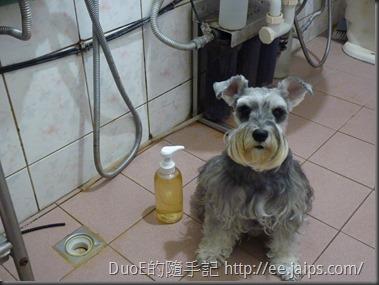 LADYBUG液態皂基-洗毛精實做1