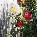 Gardening 2012 - IMG_3808.JPG