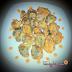 Resep Brokoli Goreng Tepung Crispy Enak dan Sehat