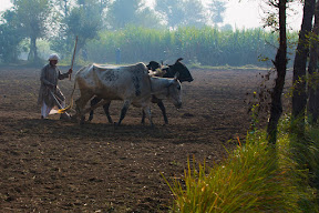 Rural life in Punjab
