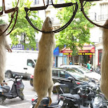 pests mice on display in Paris in Paris, Paris - Ile-de-France, France