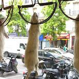 pests mice on display in Paris in Paris, Paris - Ile-de-France, France