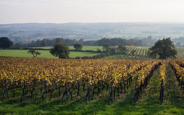 Guimbelot dégustation des chardonnay et chenin 2012 - 2013%2B11%2B16%2BGuimbelot%2Bd%25C3%25A9gustation%2Bdes%2Bchardonnays%2Bet%2Bchenins%2B2012-100.jpg